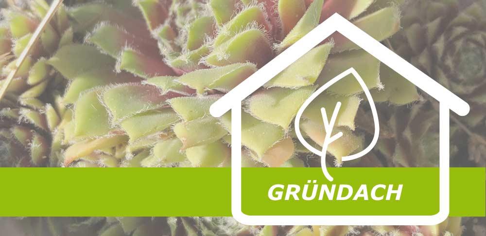 Dachbegrünung ist Trend. Gut für das Raumklima. Wirkt wie eine natürliche Klimaanlage. antignum Dachdeckermeisterbetrieb Erfurt